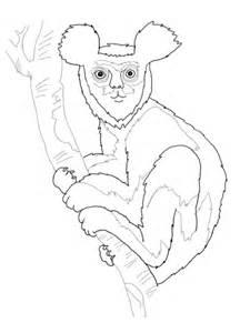 indri lemur coloring page supercoloringcom