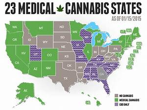 new cannabis companies