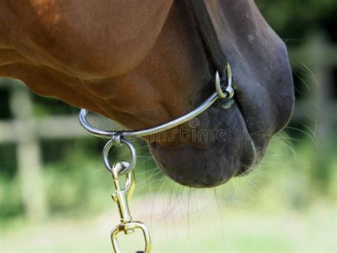 bit horse chifney abstract shot race close