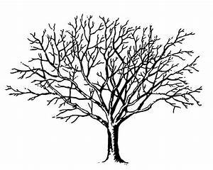 Tree Line Drawings - ClipArt Best