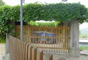 Pergola Mit Wein Bepflanzen : wildreben interessante arten f r begr nungsprojekte ~ Eleganceandgraceweddings.com Haus und Dekorationen