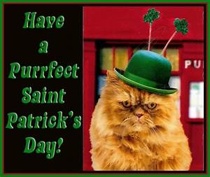 78+ images about St Patrick's Day cats on Pinterest | Luck ...