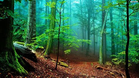 Hd Forest Wallpapers  Wallpaper Cave