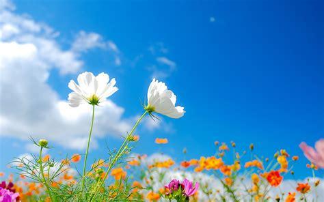 花 画像 に対する画像結果