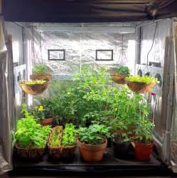 grow your own food indoors maximizing your growing space