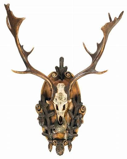 Deer Trophy Fallow Skull European Mount