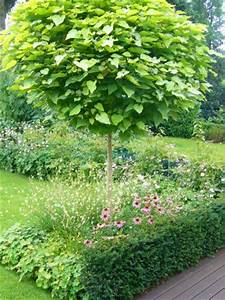 Kleiner Baum Garten : neues beet mit kugelbaum mein sch ner garten forum ~ Lizthompson.info Haus und Dekorationen