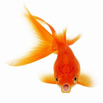 Fish Clipart Freepngimg
