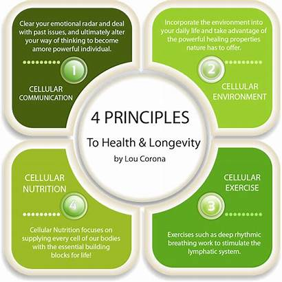 Principles Four Lou Corona Principle Health Received