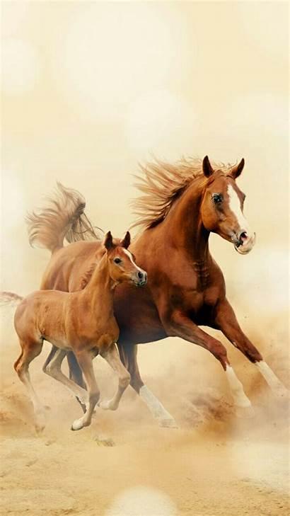 Horse Running Wallpapers Mobile Girly Horses Phone