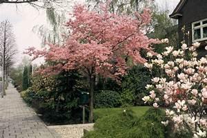 Kleine Bäume Für Den Garten : ideen f r den kleinen garten planungswelten ~ Markanthonyermac.com Haus und Dekorationen