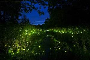 Seb's Japanese Adventures: Kyoto Fireflies