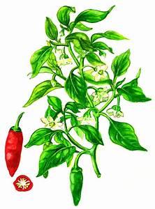 Rushina Munshaw Ghildiyal  Perfect Foodles
