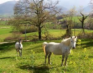 Espérance De Vie Cheval by Extraits D Un Article Parut Sur Le Blog 171 Equilibre 171 Blog