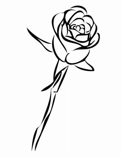 Rose Coloring Single Pages Stem Printable Drawing