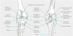 Pcl Tear - The Complete Injury Guide