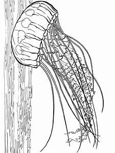 Labelled Jellyfish Coloring Page - Jellyfish Coloring ...