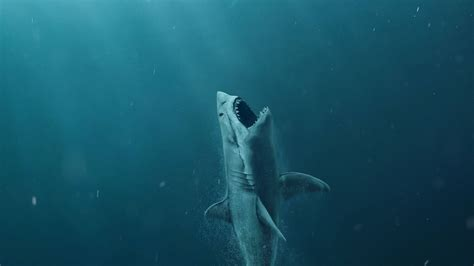 wallpaper  meg shark  movies
