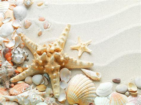 Seashell Wallpapers  Wallpaper Cave