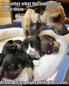 Funny Baby Pictures with Captions | ... adopted - Loldogs ...