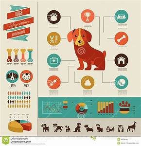 Healthy Dog Chart Dogs Infographic And Icon Set Stock Vector Image 38506586