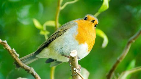 10 beautiful hd wallpapers of exotic birds bighdwalls