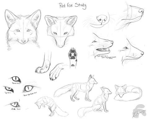 drawing doodles red fox doodles  krissyfawx