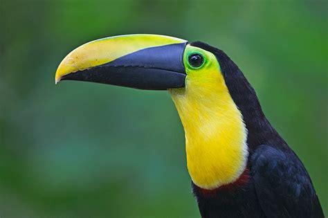 Northern Ecuador Birding With A Camera (bwc