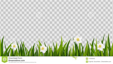 seamless green grass spring flowers border isolated