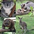 Marsupial - Wikipedia