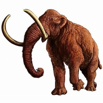 Mammoth Woolly Svg Wikimedia Commons Wiki Wikipedia