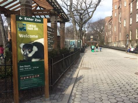 zoo york central park grizzly bears reasons need