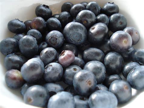 Grain Free Lemon And Blueberry Cake Gf Scd