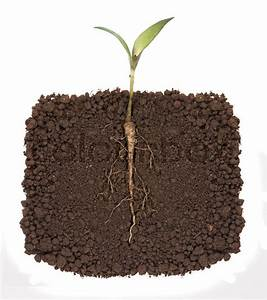 Young Plant With Exposed Roots In Soil