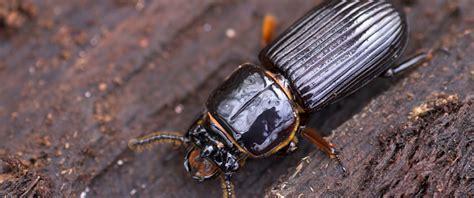 bed bug eggs - FAQ: Can Salt Kill Bed Bugs? - DKRS GROUP