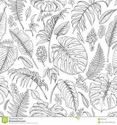 Monstera Sketch Tropical Leaves Fern Plants Pattern