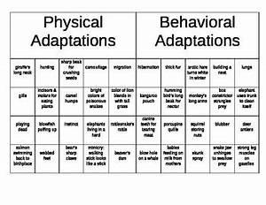 Physical vs. Behavioral Adaptations Sorting   Activities ...