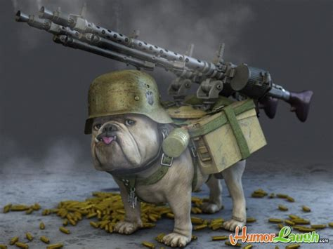 animation   army dog funny animal  chill