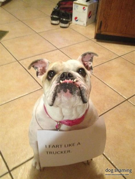naughtiest pets confessing  crimes