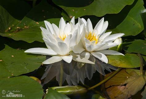 tumbuhan foto gambar