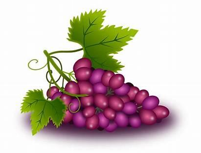 Uvas Grapes Grape Clipart Vid Vine Vino
