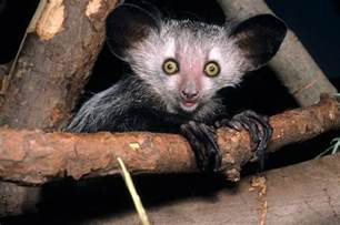Best Scary Animals That Are Totally Harmless Images