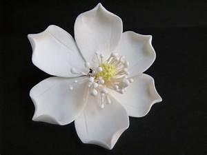 Magnolia Flower Part 1 – WeNeedFun