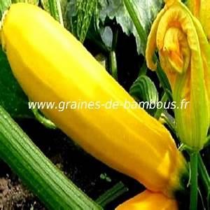 Potiron Magasin En Ligne : graines et semences de courgette jaune ~ Dailycaller-alerts.com Idées de Décoration