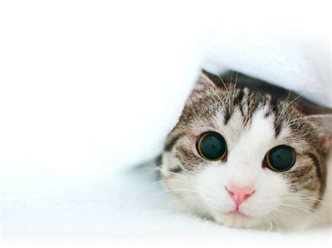 Funny Cats Hd Wallpapers Free Download  Hd Wallpapers