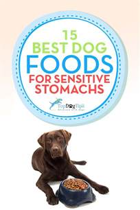 cat food for sensitive stomachs top 15 best sensitive stomach foods for upset stomachs