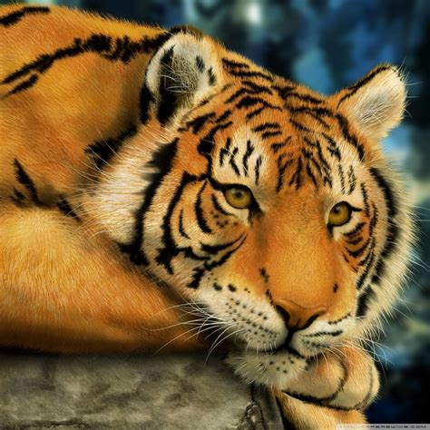 wallpaper hd harimau info  tips