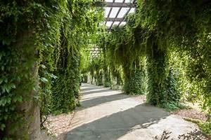 Pergola Mit Wein Bepflanzen : pergola begr nung ~ Eleganceandgraceweddings.com Haus und Dekorationen