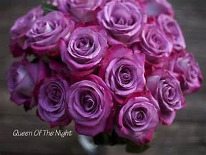 The Lavender & Purple Rose Study | Flirty Fleurs The ...