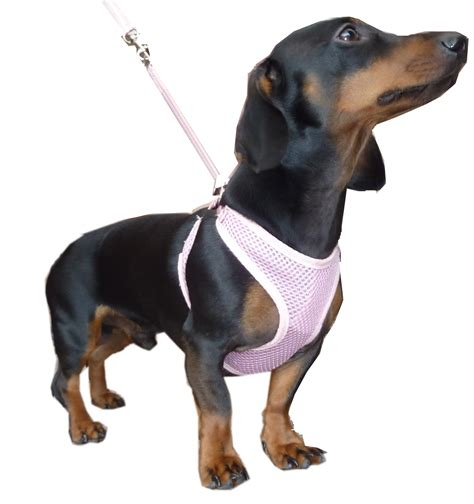hdp  pull  choke puppy dog harness  lead combo